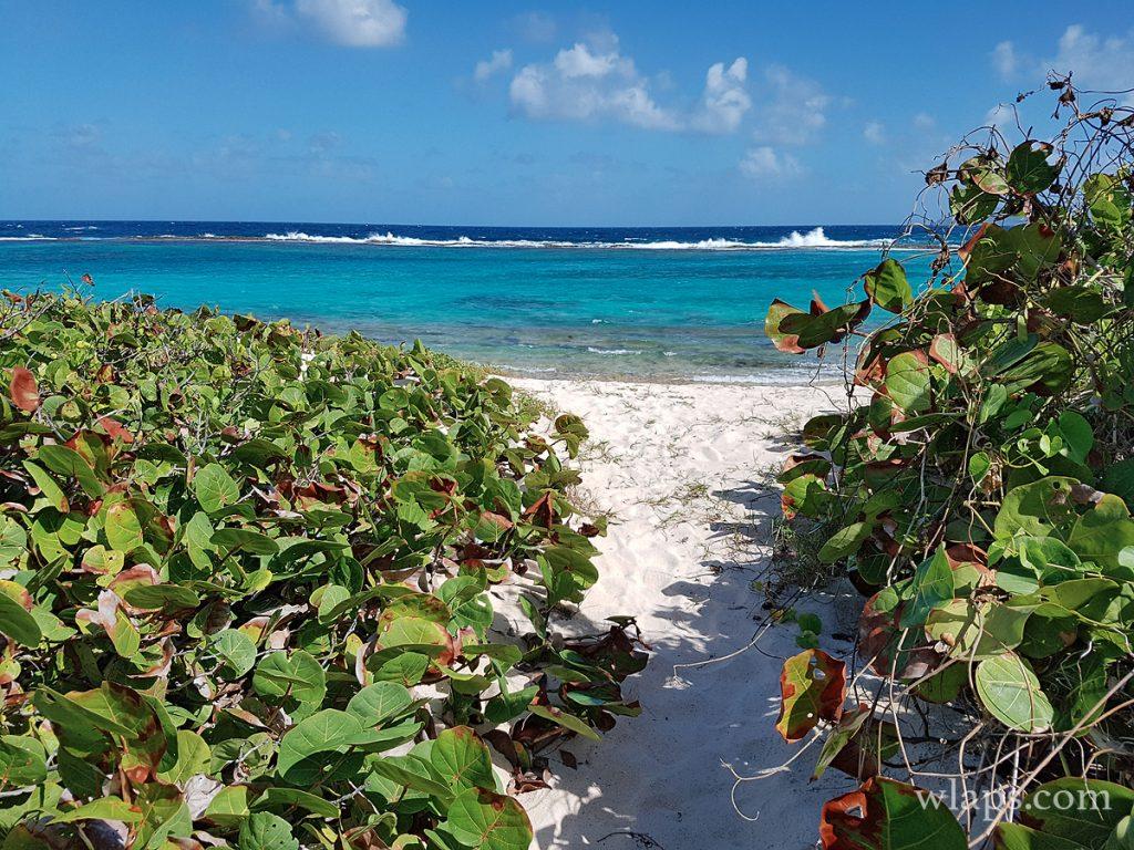 Plage naturiste des Salines en Guadeloupe