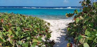 arrivee-mer-plage-salines-guadeloupe