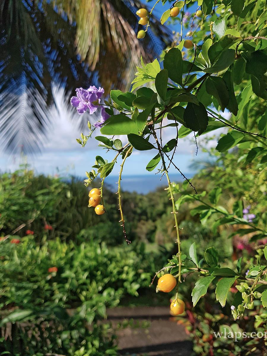 vue-plage-de-la-perle-guadeloupe.jpg