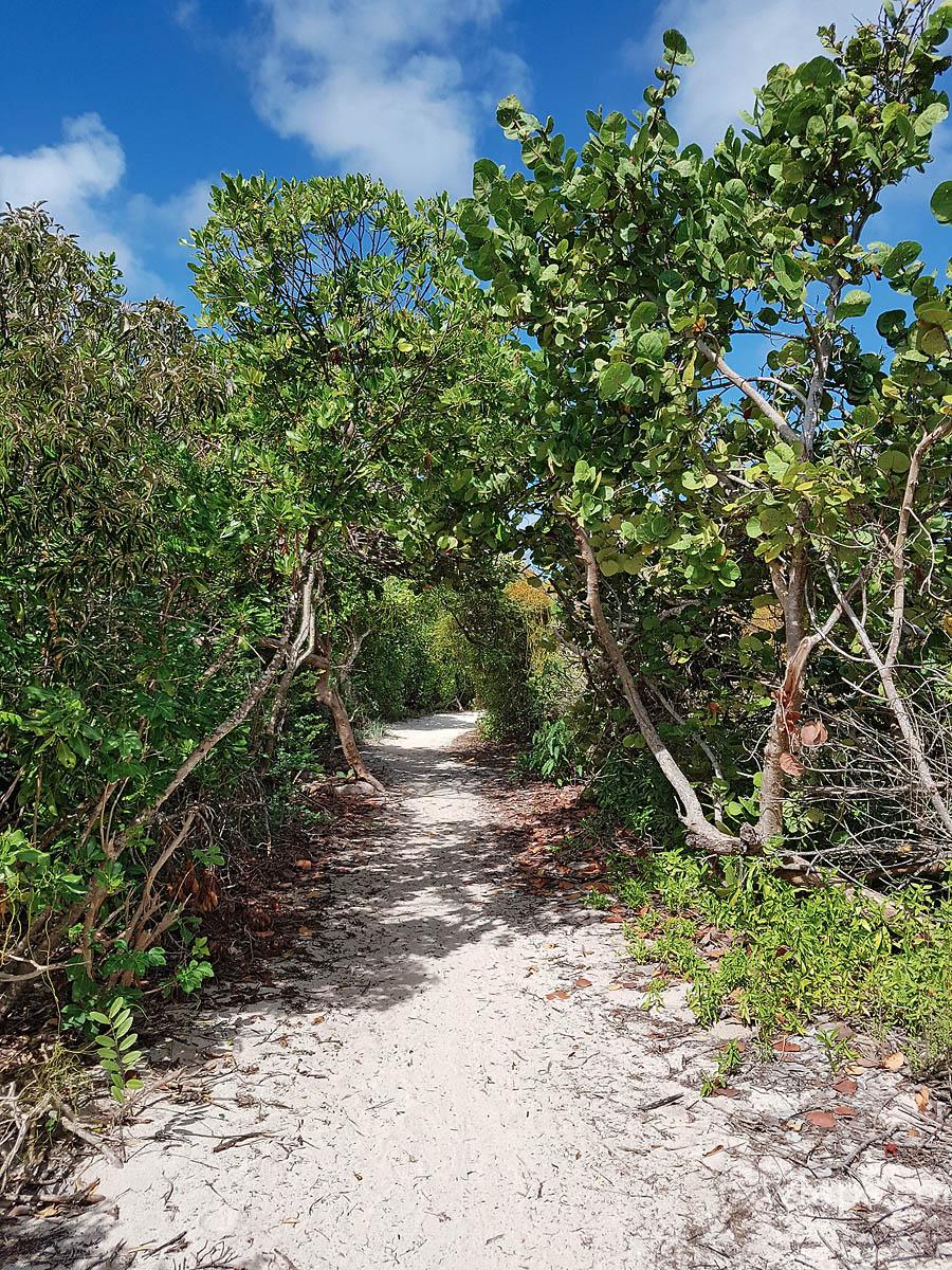 Le chemin qui mène à la plage naturiste des Salines en Guadeloupe