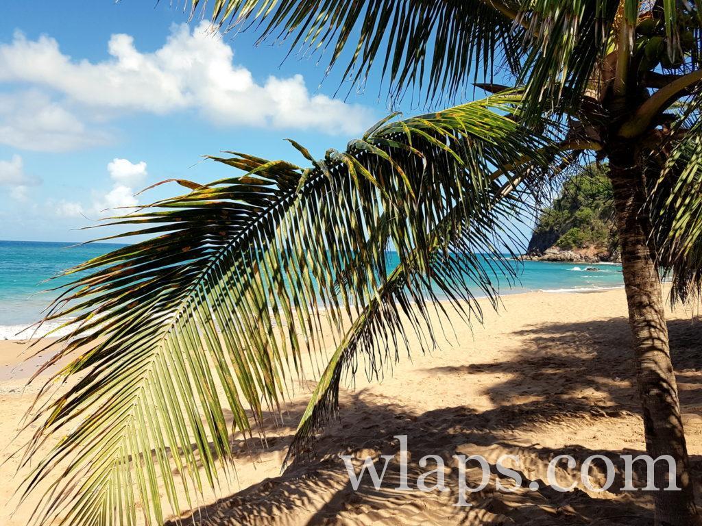 La plage naturiste de l'Anse Tillet en Guadeloupe