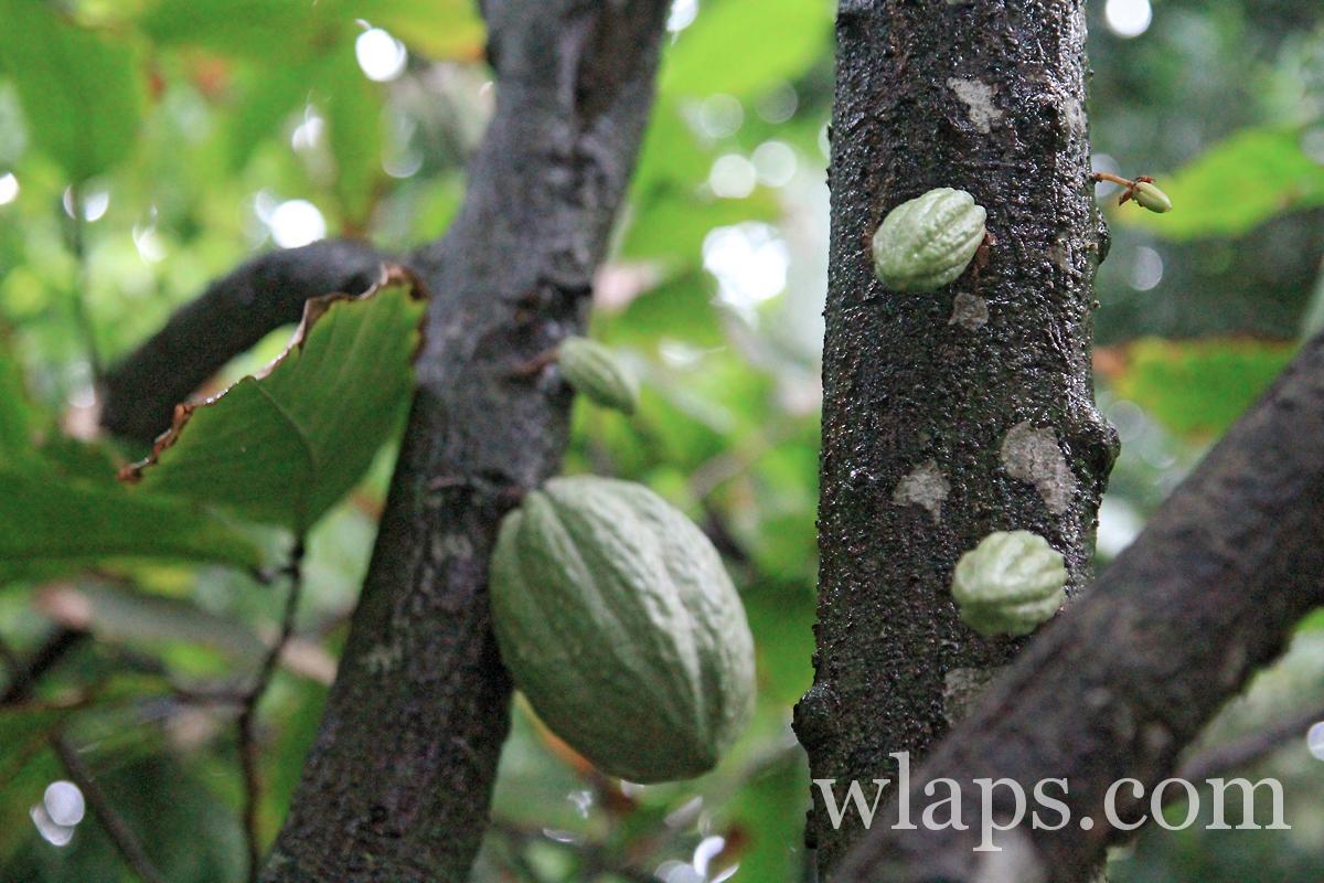 2-maison-cacao-pointe-noire-avis-photos