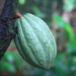 6-photo-maison-cacao-pointe-noire