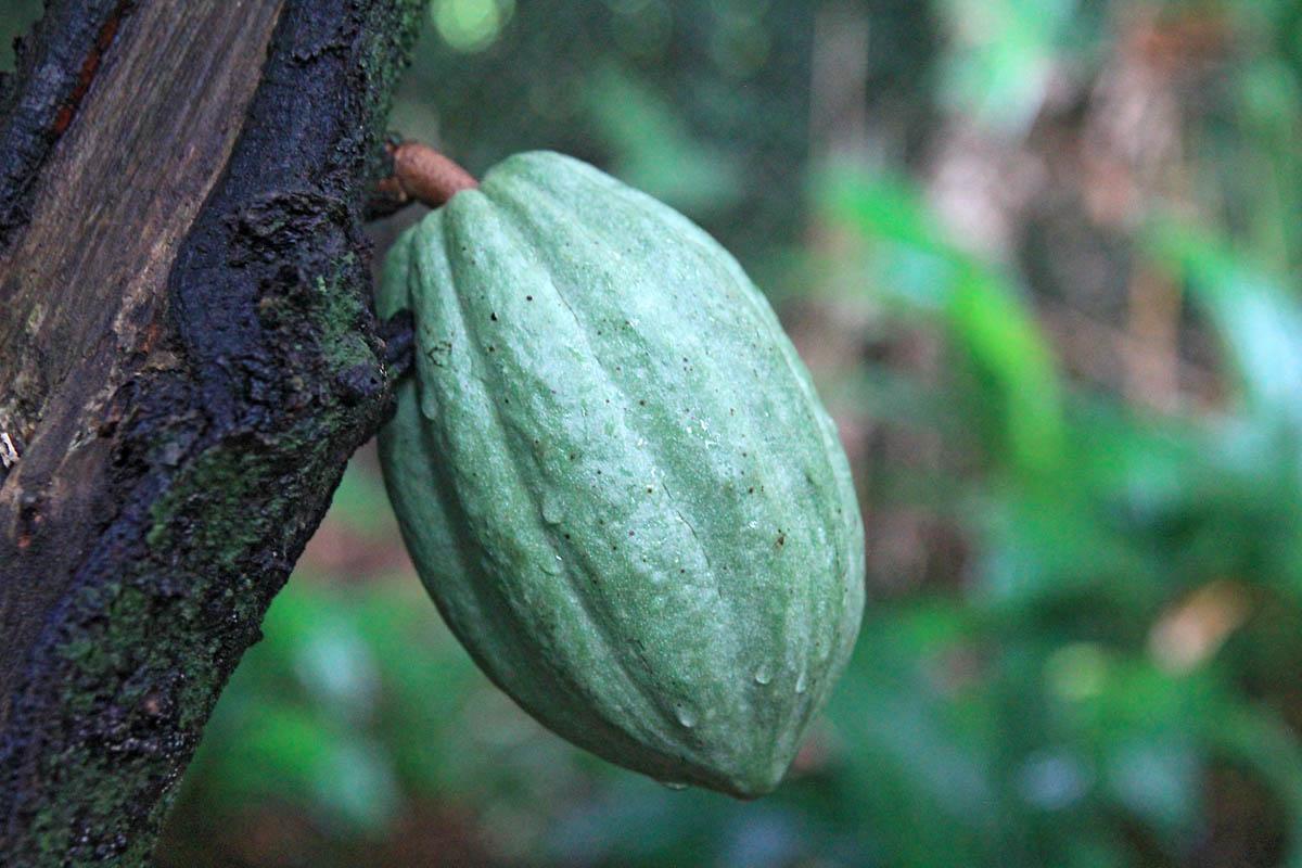4-maison-du-cacao-pointe-noire-avis-photos