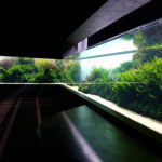 2-photo-oceanarium-de-lisbonne