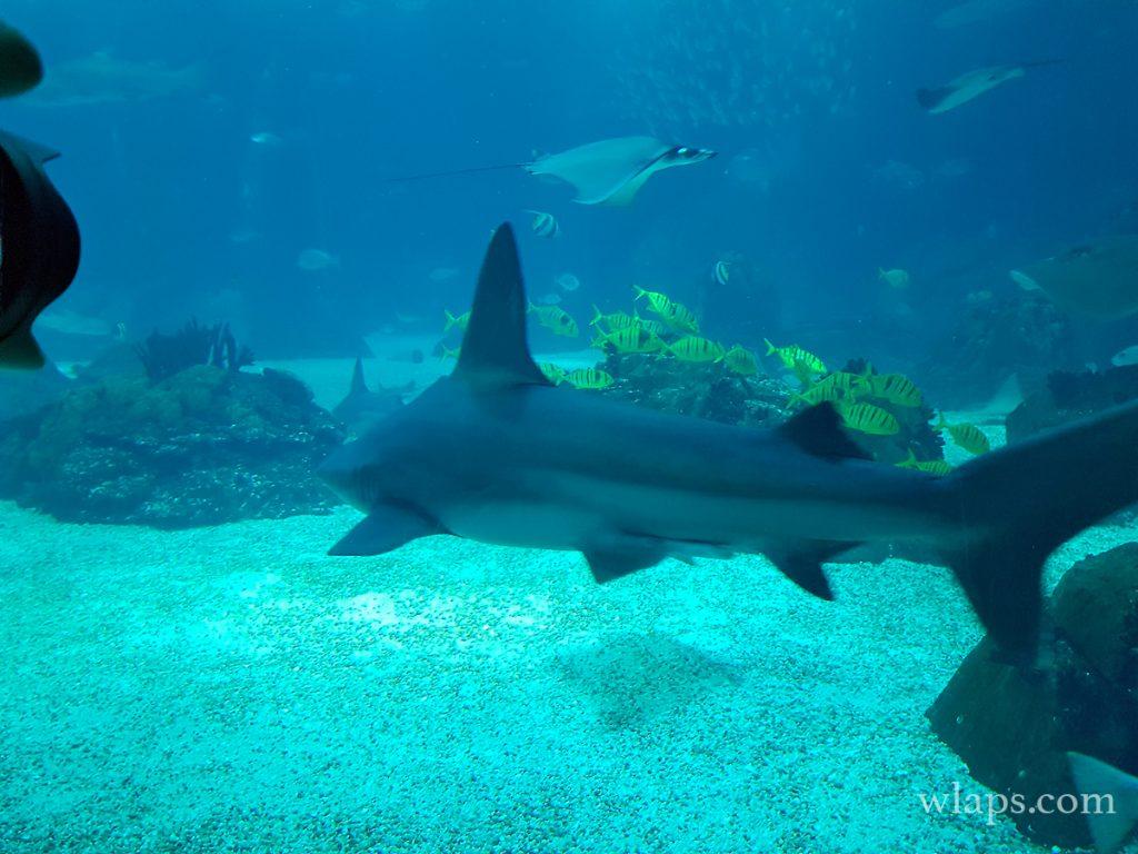 requin à la réunion