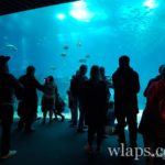 6-photo-oceanarium-de-lisbonne