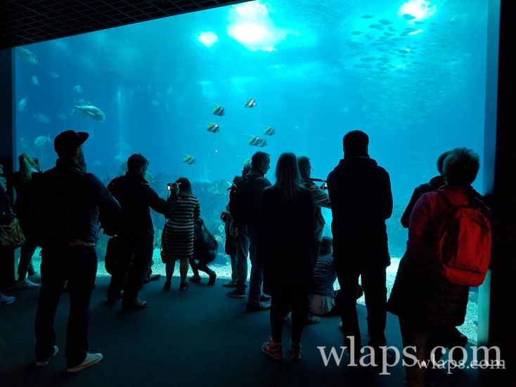 Oceanarium de Lisbonne