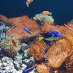 7-photo-oceanarium-de-lisbonne