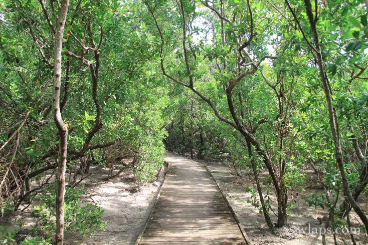 Sur le chemin de randonnée près des Salines en Martinique