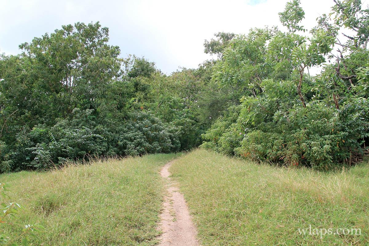 Sentier de randonnée en Martinique