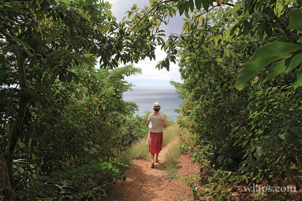 Sur le sentier de randonnée en Martinique
