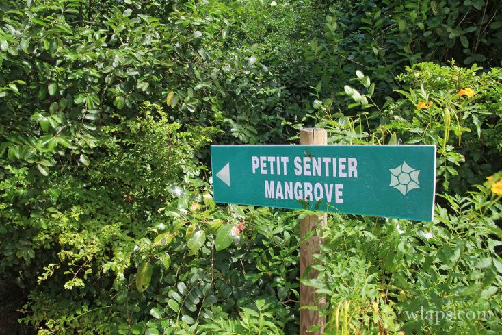 Panneau petit sentier mangrove