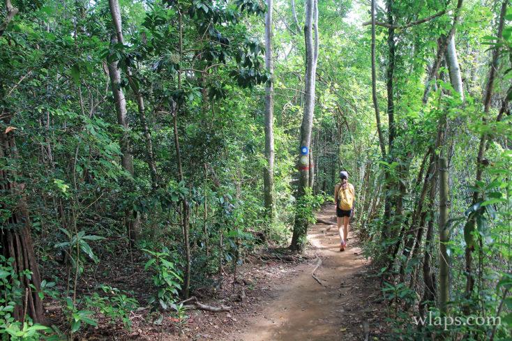 Chemin de randonnée en Martinique