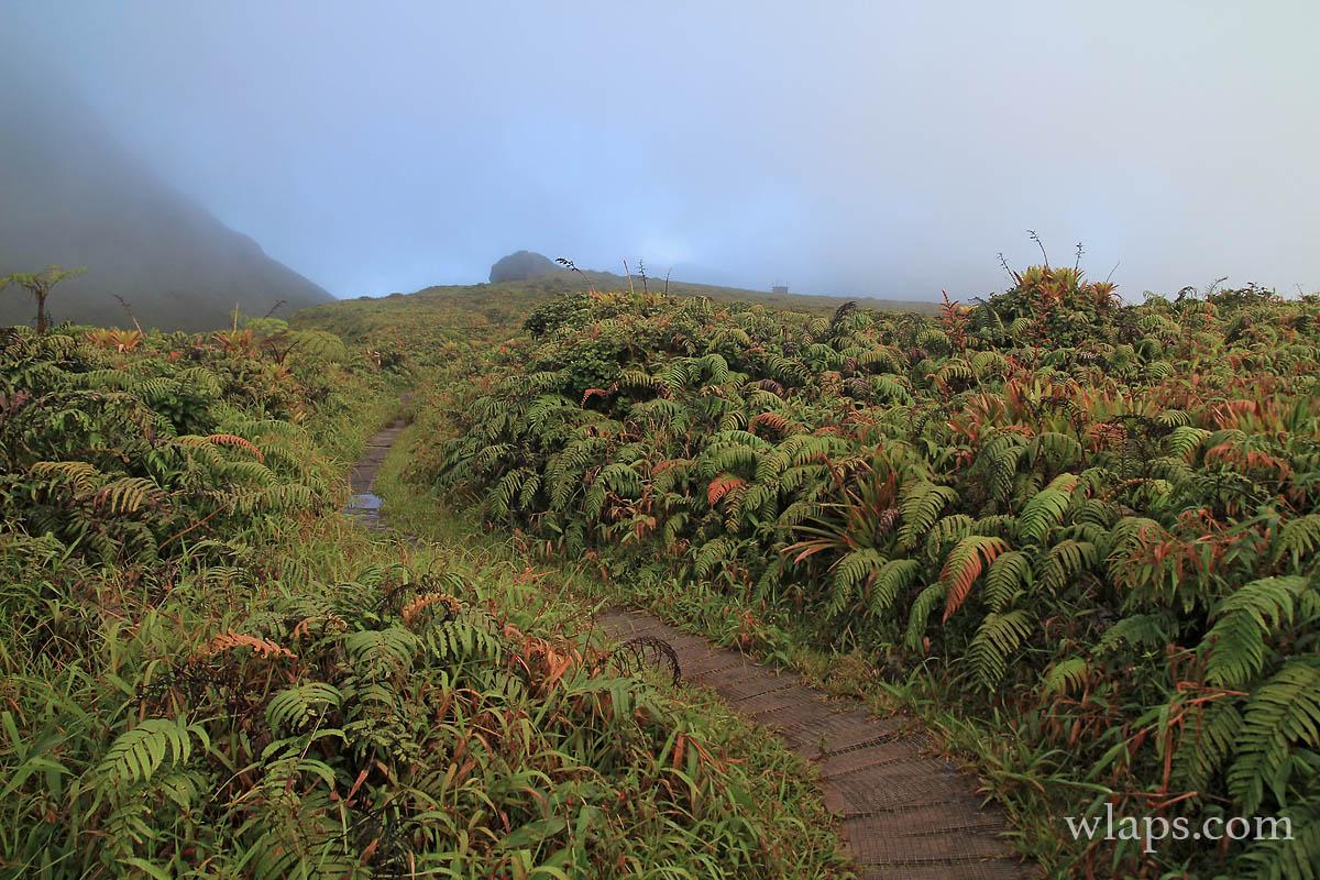 Sur le plateau des Palmistes en Martinique