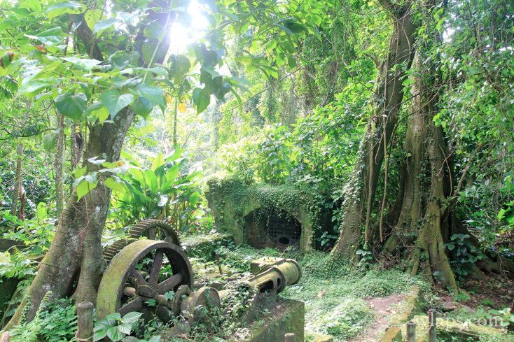 Vue sur des ruines en Martinique