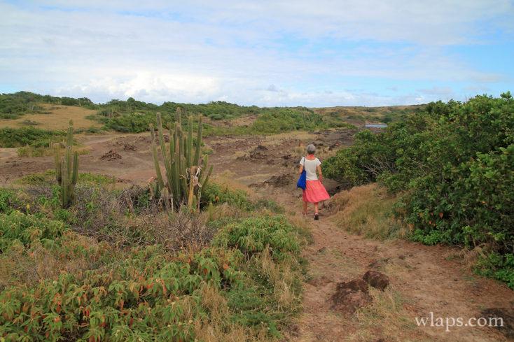 Vue sur le chemin de randonnée à la Savane des Pétrifications