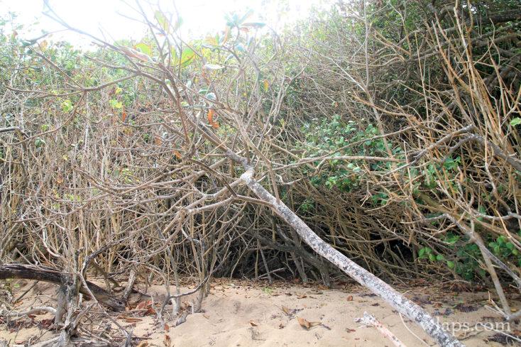 Vue sur la végétation sèche à la plage