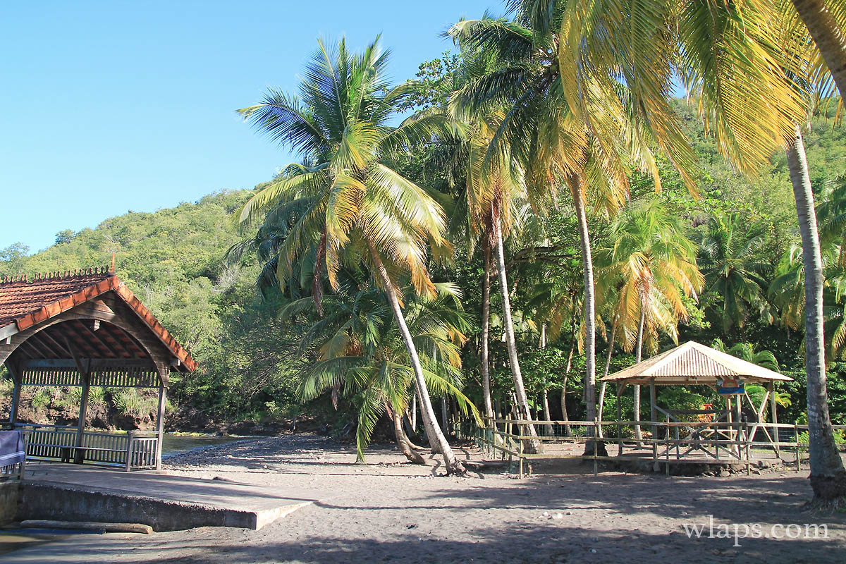 cocotiers-plage-noire