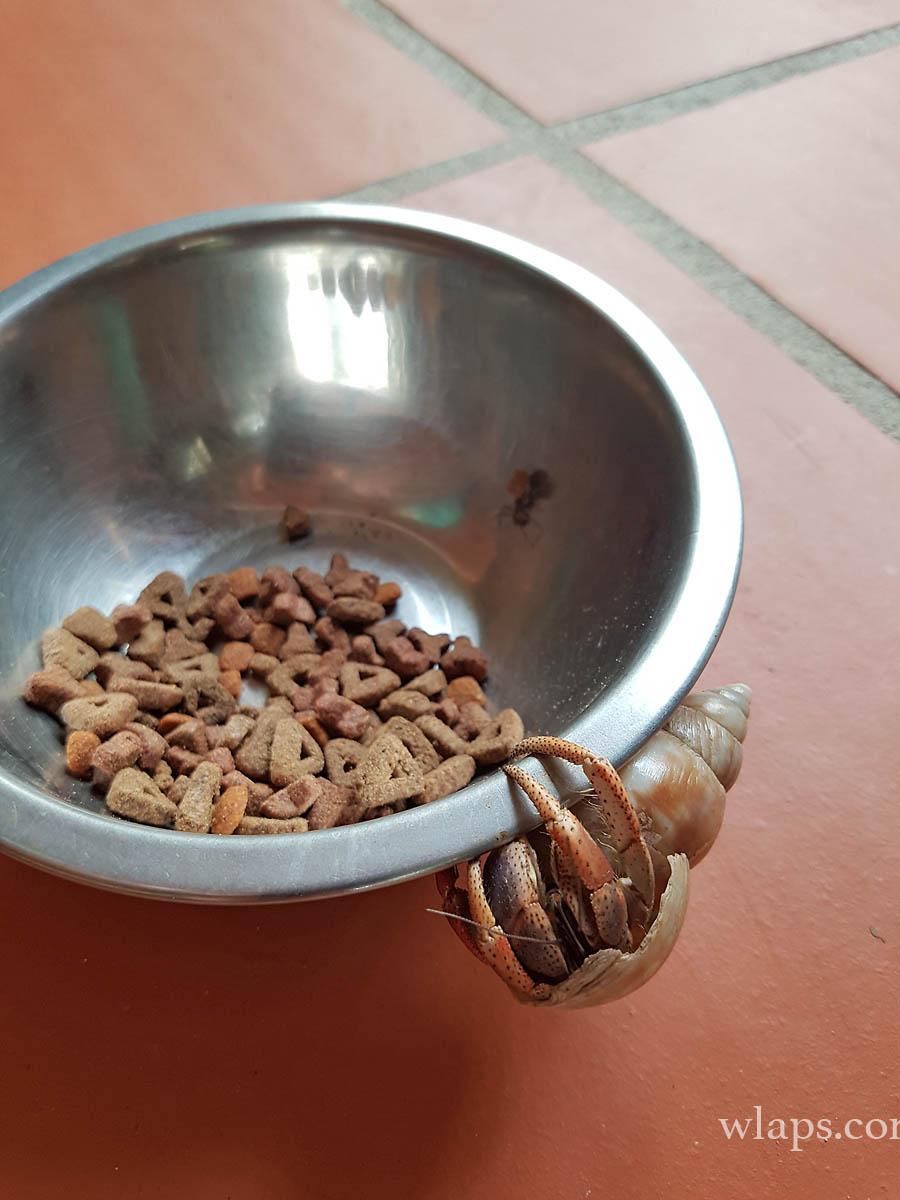 croquette-bernard-hermite