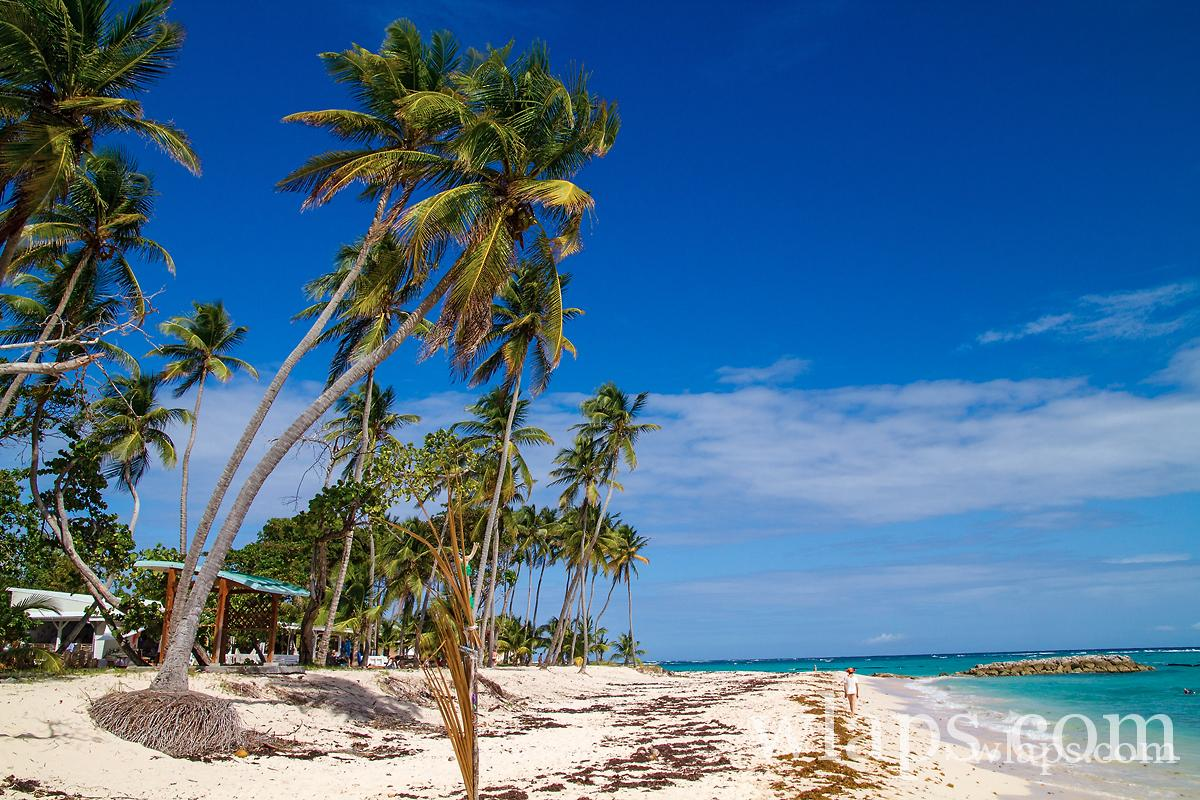 plage anse feuillere guadeloupe