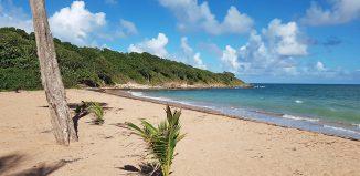 anse-plage-amandiers-guadeloupe