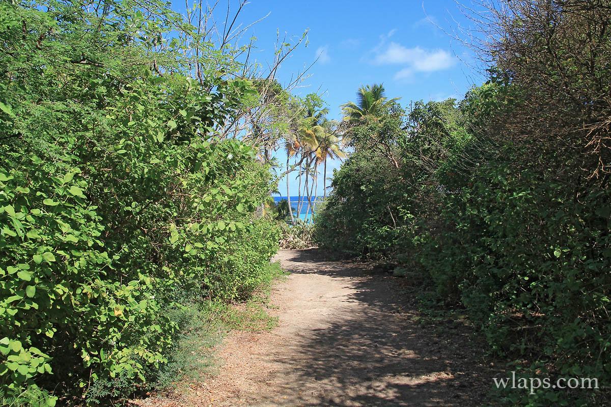 Sentier qui va à Anse Michel