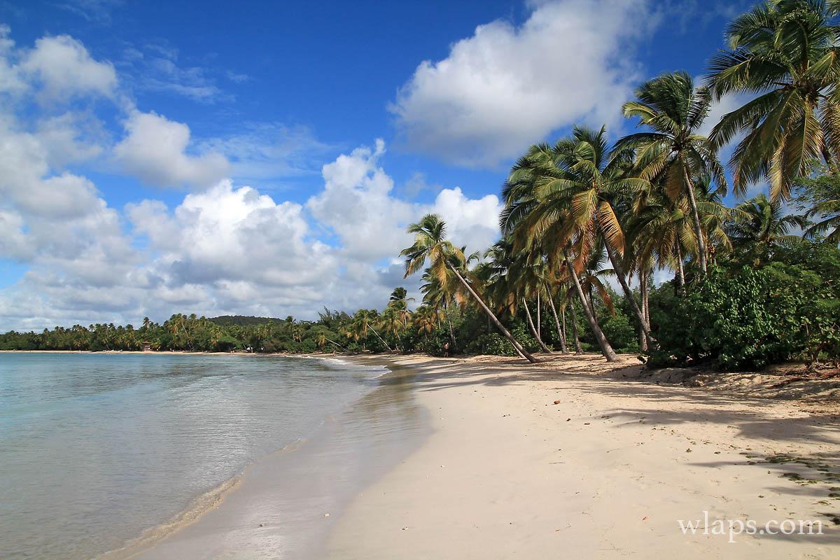 cocotiers-grande-anse-salines