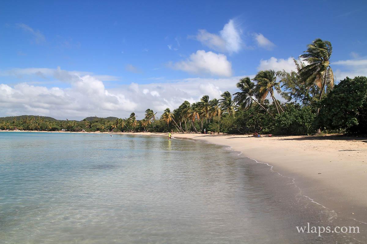 bordure-cocotiers-plage-salines-martinique