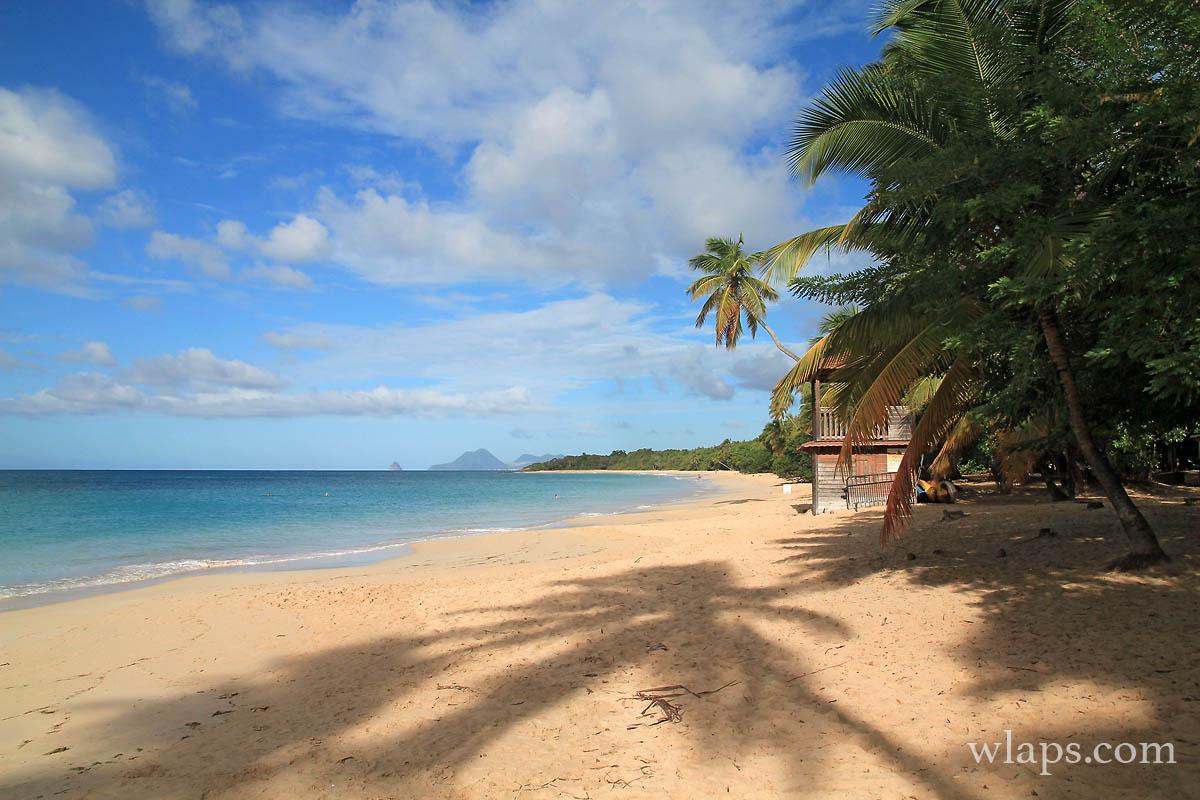 L'ombre des cocotiers sur le sable blond