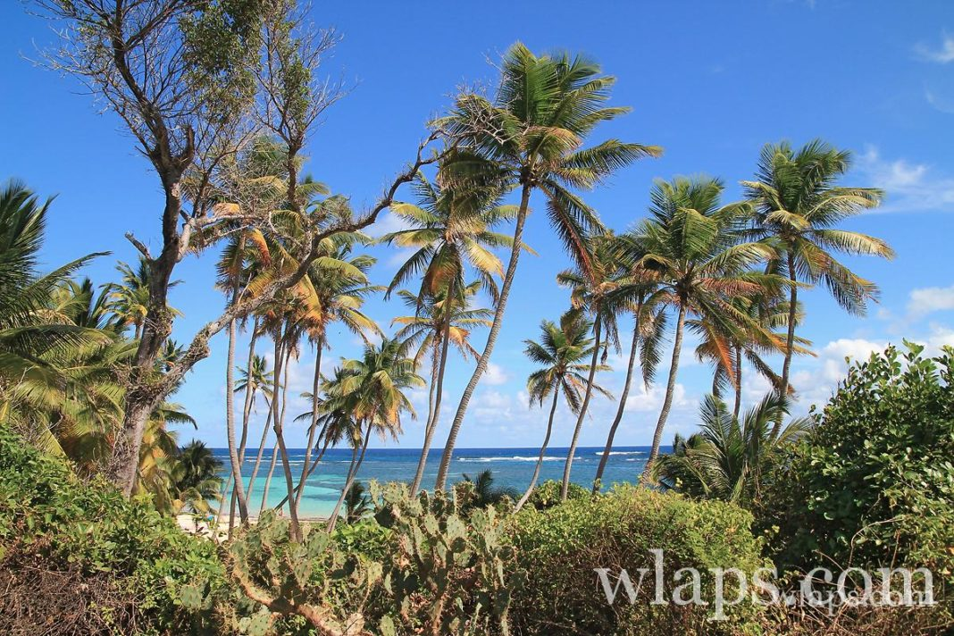 cocotiers-anse-michel
