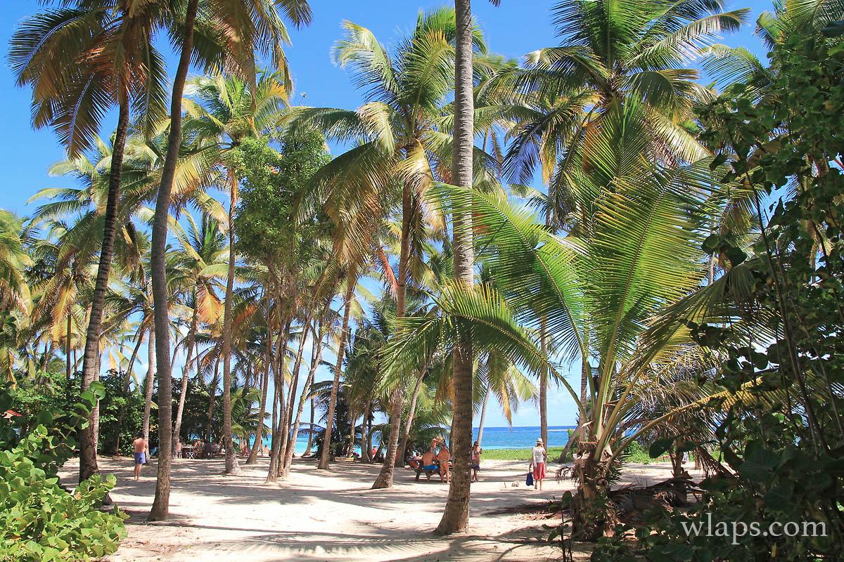 cocotiers-plage-cap-chevalier