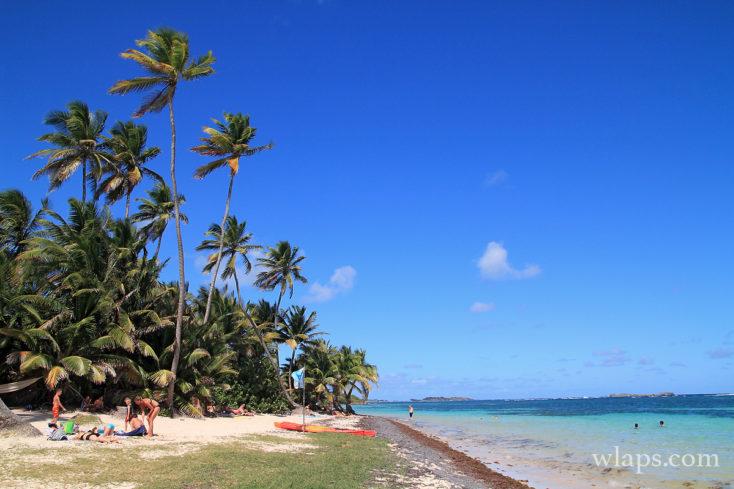 Cocotiers et mer de la plage anse michel