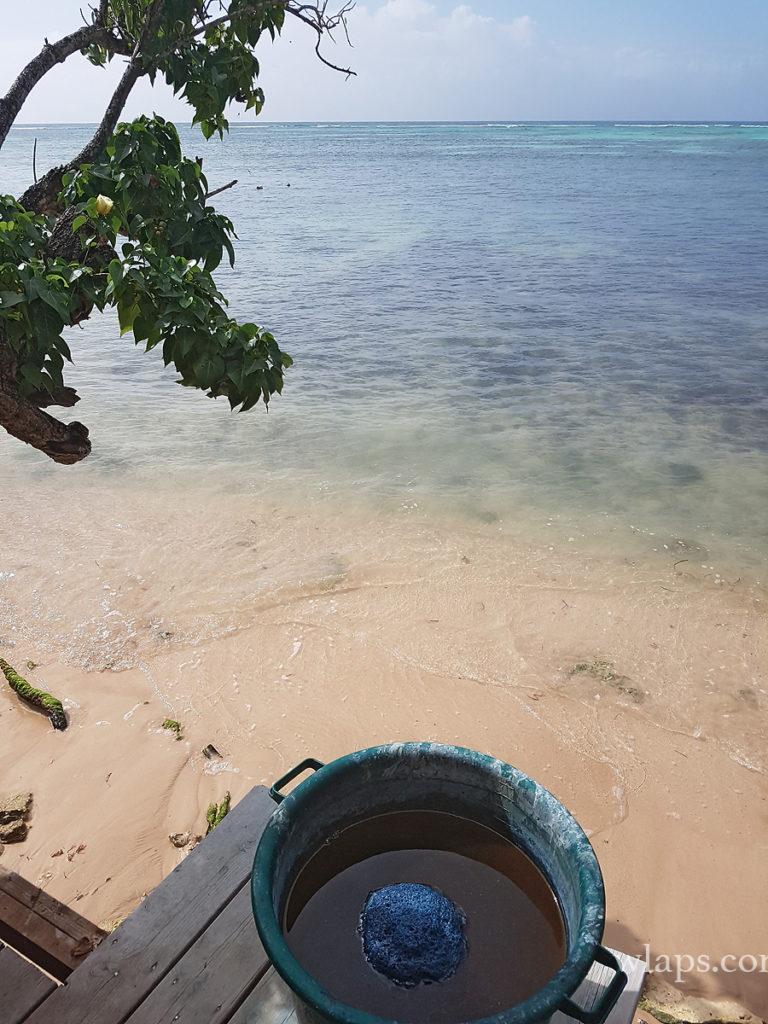 bassin pleine d'indigo à la maison de l'indigo de marie-galante