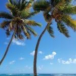 la-plage-de-la-feuillere-marie-galante-3