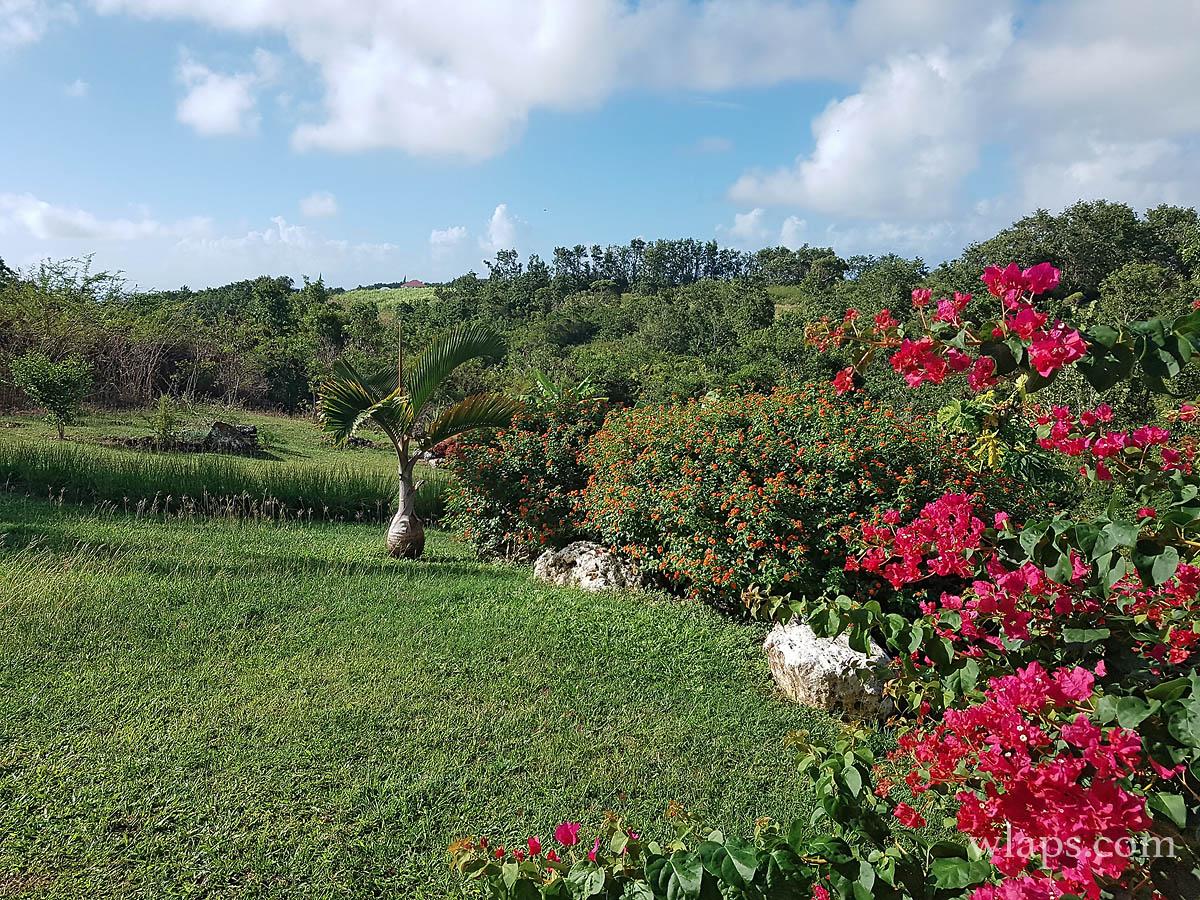 Notre jardin marie galante wlaps for Jardin 4 epices marie galante