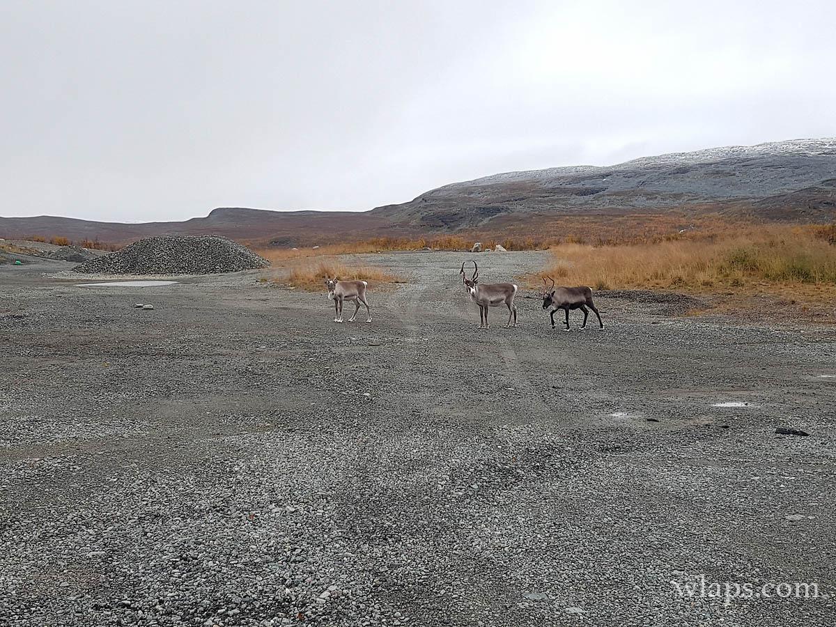 1-voir-rennes-laponie-finlande