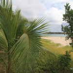 mer-grande-terre-salines-martinique