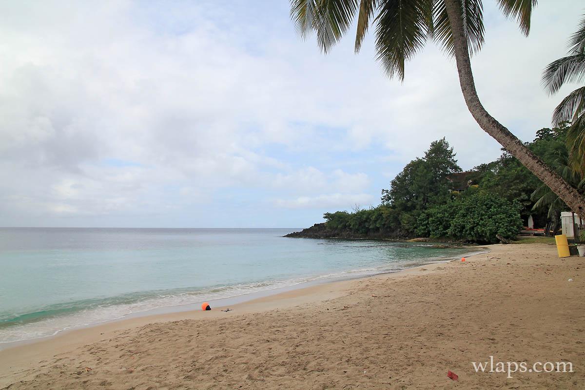 cocotier-arbres-plage-figuier