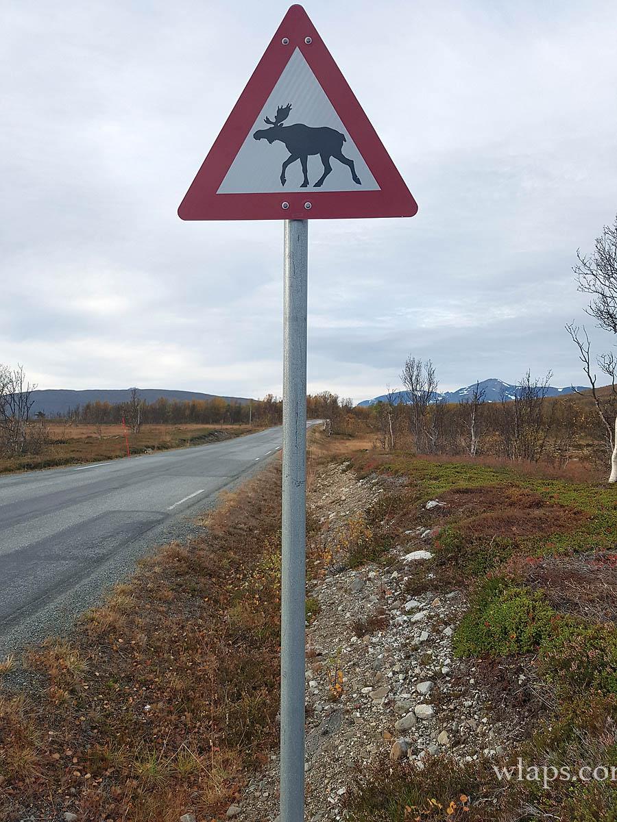 renne-lyngen-norvege