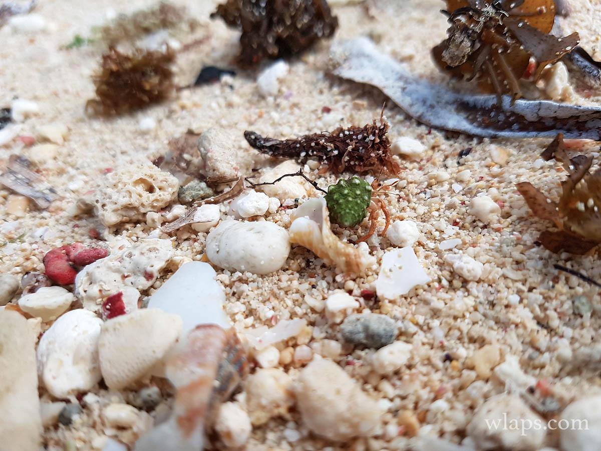 mer-plage-anse-bambou-marie-galante