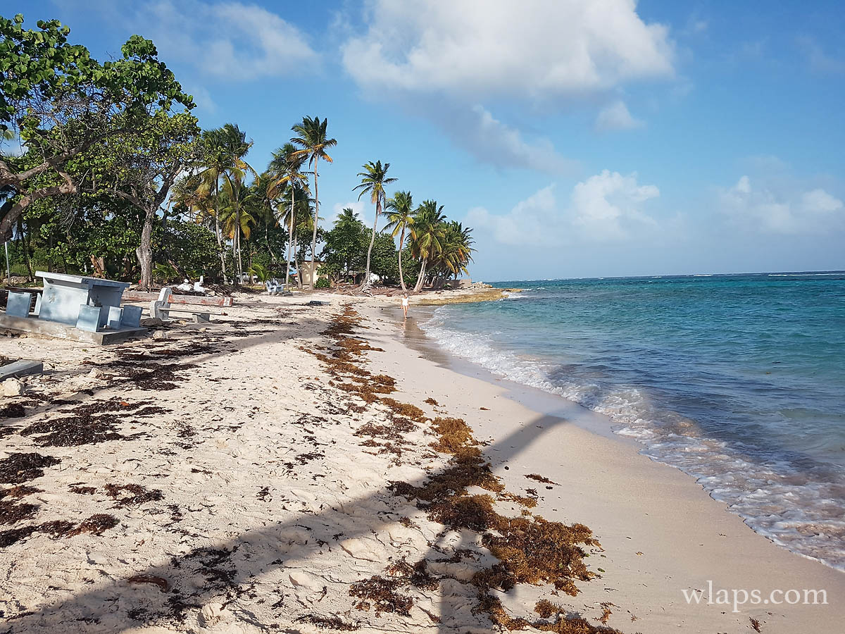 cocotiers-mer-petite-anse