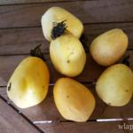 Pommes lianes