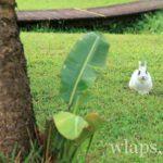 lapin-sauvage-dans-herbe
