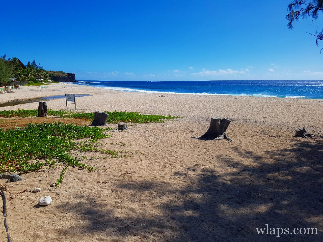 Requin à la plage de Boucan Canot à l'ile de La Réunion
