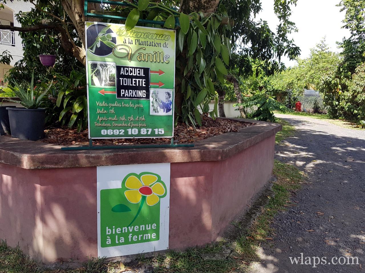 Visiter une vanilleraie à La Réunion