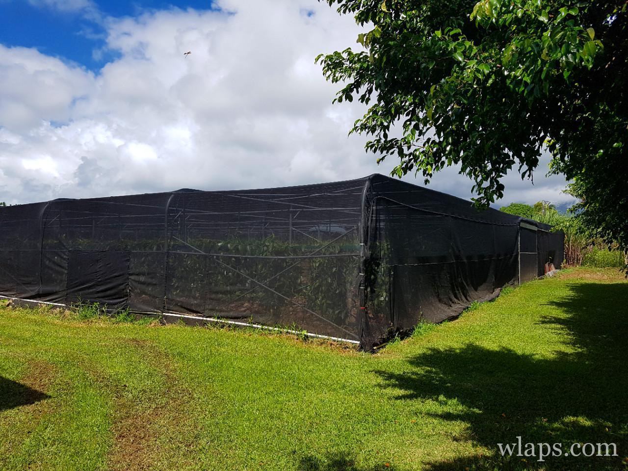 Vanilleraie Roulof à La Réunion