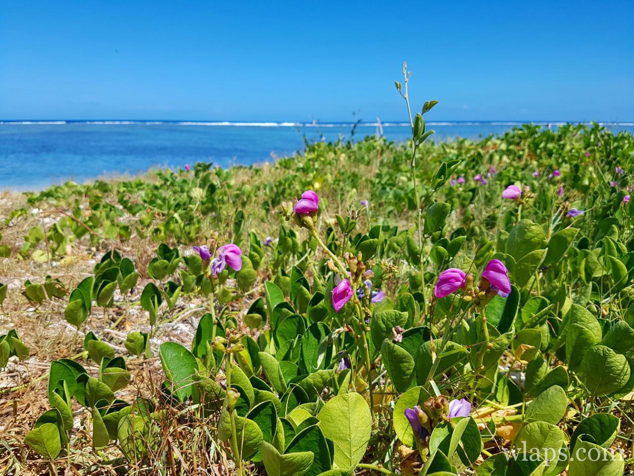 La plage de la Saline les Bains à l'ile de La Réunion