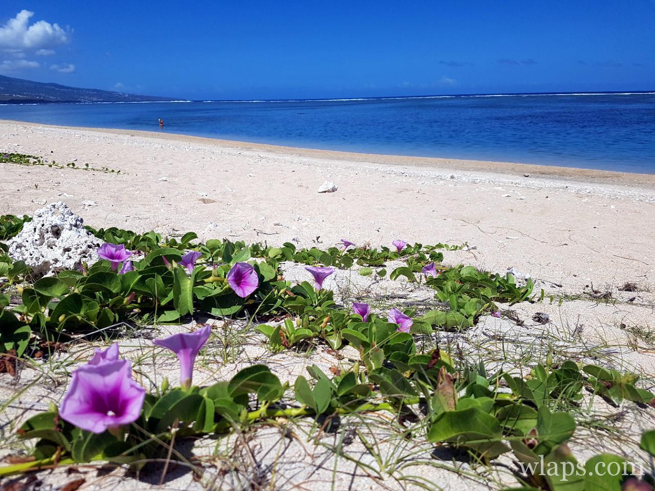 Sable blanc de la plage de la Saline les Bains à La Réunion