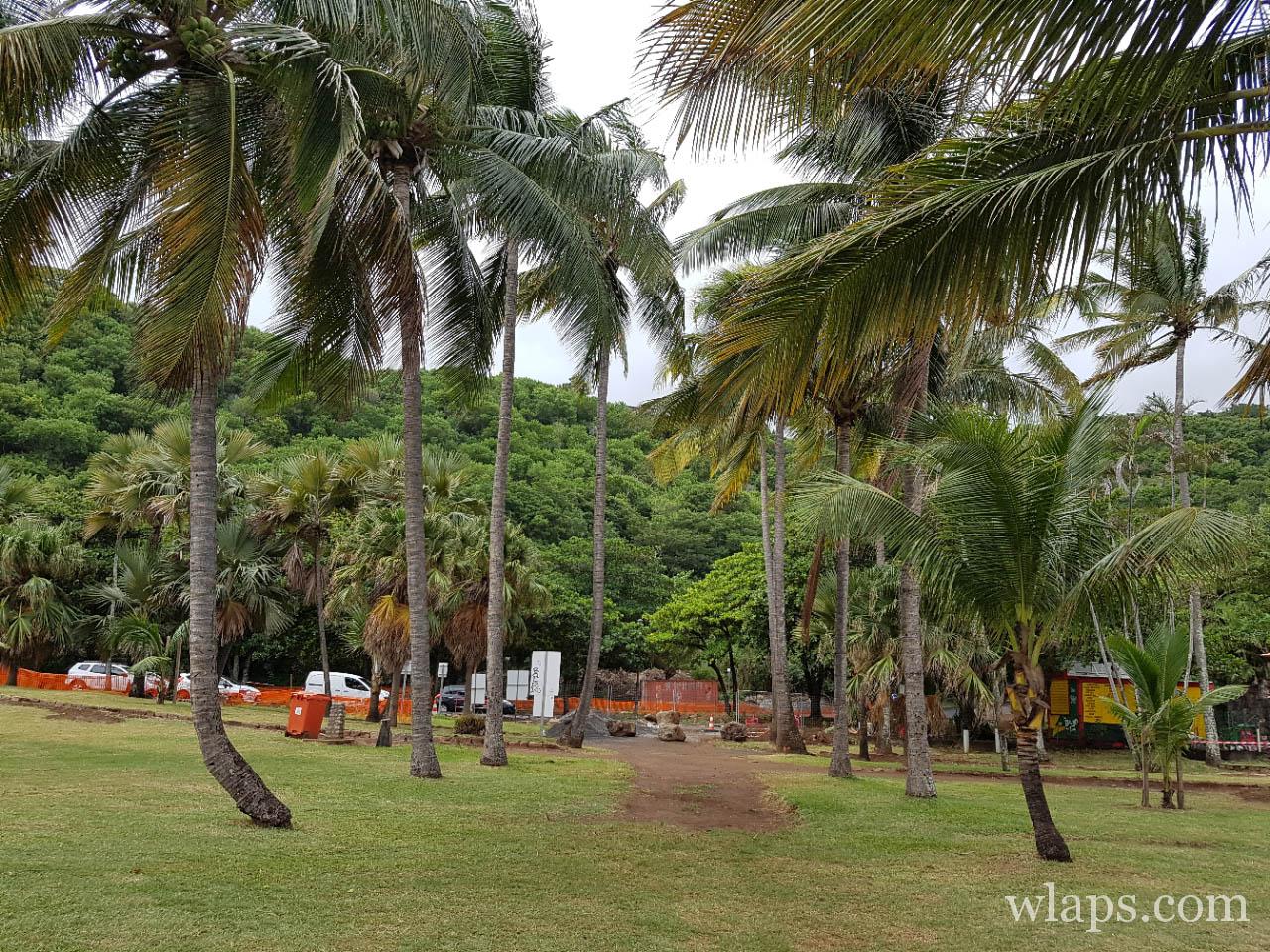 Zone de végétation à la plage de Grande Anse à l'île de La Réunion